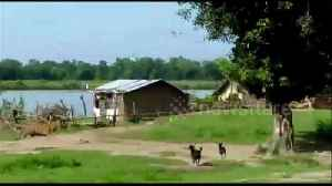 Dogs chase off vicious tiger, saving children from near attack in India village [Video]