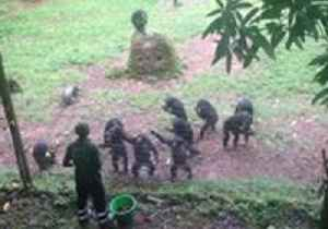 Teenage Chimpanzees Display Perfect Manners as They Patiently Wait to be Fed One-by-One [Video]