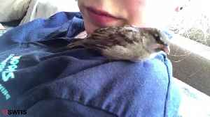 RSPCA takes away home reared sparrow [Video]