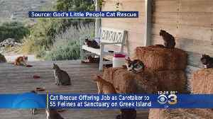 Get Paid To Live On A Greek Island And Play With Cats [Video]
