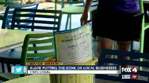 Algae makes employees sick, but business sees increase in sales [Video]