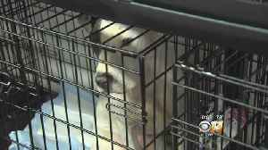Massive Operation To Save Shelter Dogs In Garland [Video]