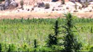 A push in Lebanon to legalise cultivation of medical cannabis [Video]