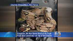 'Didn't Notice It At First': Man Finds Boa Constrictor On Engine [Video]