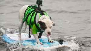 Pics Of The 2018 World Dog Surfing Championships Online [Video]