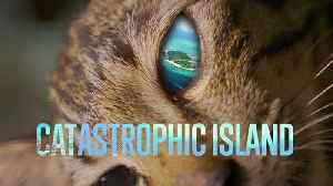 Solving the CATastrophe on Mabul Island [Video]