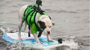 News video: Pics Of The 2018 World Dog Surfing Championships Online