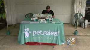 Pet Owners Turning To CBD, Or Cannibas, Oil To Help Their Pets [Video]