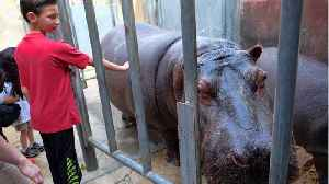 Police Looking For Man Who Smacked Hippo At LA Zoo [Video]