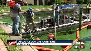 Algae cleanup: How long will it take? [Video]