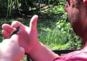 Stunned Hummingbird Rests Placidly on Rescuer's Finger [Video]
