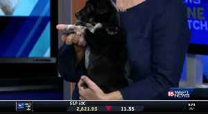 Pet of the Week: Brewer [Video]