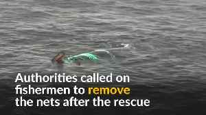 Chilean Navy frees trapped whale [Video]
