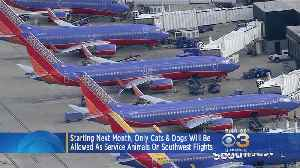 New Policy: Only Cats, Dogs Allowed As Service Animals On Southwest Flights [Video]