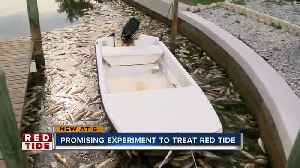 Scientists experiment with new tool to fight red tide in canals [Video]