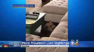 Wildlife Officers Searching For Mountain Lions Roaming Boulder [Video]