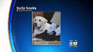 Former President's Service Dog Strikes Pose With His Image On Socks [Video]
