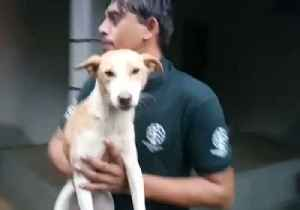 Rescue Crews Search for Stranded Animals Amid Deadly India Flooding [Video]