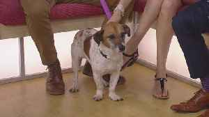 Meet, Dixie, Our Pet Guest Of The Week [Video]