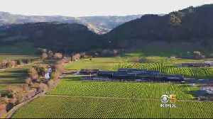 Silver Oak Winery Goes Green [Video]