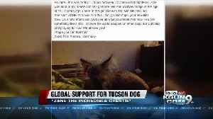 Tucson dog gets worldwide attention on road to recovery [Video]