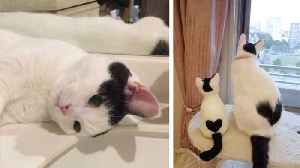 Tiny kitty wins online fans with amazing heart-shaped marking on pristine white coat [Video]