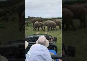 Young Elephants Play-Fight in Wildlife Reserve [Video]