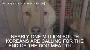 Call to ban dog meat trade in South Korea [Video]