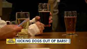 Florida health officials cracking down on dogs inside breweries [Video]