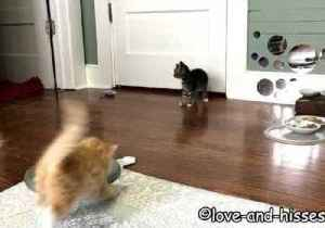 Seven-Week-Old Kittens Toss and Tumble Around the House [Video]