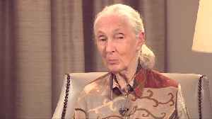 Jane Goodall talks Trump and 'Jane's' Emmy nominations [Video]