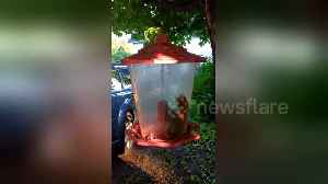 How did this squirrel end up inside a bird feeder? [Video]