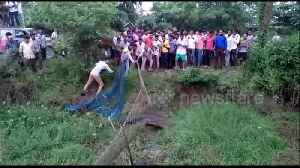 Village works together to remove giant crocodile from pond after pig attack [Video]
