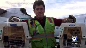 Man who hijacked Sea-Tac plane once owned bakery in North Bend [Video]