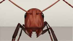 Scientists Are Study Ant Societies W/ Paint [Video]