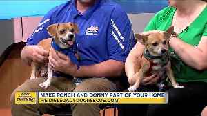 Rescues in Action Aug. 25: Ponch and Donny need forever homes [Video]