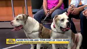 Rescues in Action Aug. 26 | On National Dog Day, make Patches and Titus a part of your familiy [Video]