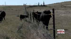 Lifting of China's beef ban helpful for SD producers [Video]