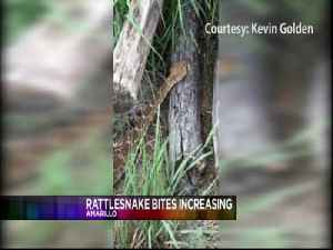 Officials Warning of Rattlesnake Bites [Video]