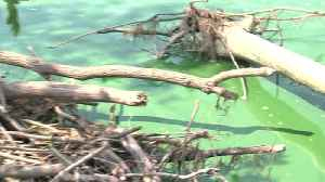 Algae shows up early in Green Bay [Video]