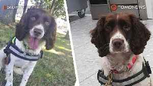 UK Border Force detector dogs celebrate 40 years [Video]