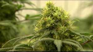 VIDEO: Allentown council to vote on lessening penalties for marijuana possession [Video]