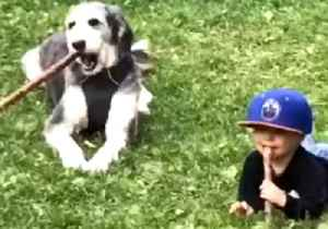 Branchin' Out: Kid Learns to Fetch Sticks in His Mouth With New Dog Friend [Video]