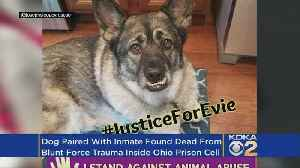 Dog In Prison Foster Program Found Dead In Cell Of 'Blunt Force Trauma' [Video]