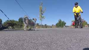 Section of Boise Greenbelt closes for construction on phase two of the whitewater park [Video]