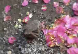 Pup Takes Fetch to a New Level And Brings Her Owner a Brick [Video]