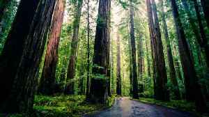 It Would Take A US-Sized Forest to Offset Our Coal Emissions [Video]