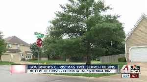 Missouri governor on the hunt for a Christmas tree [Video]