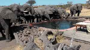 Wild Elephants casually drink water from pool in front of campers [Video]