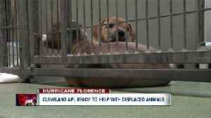 Cleveland APL on standby to take in animals from hurricane-stricken areas [Video]